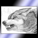 Big Eared Wolf
