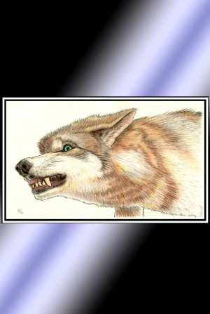 Colored Pencil Wolf