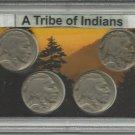 Buffalo Nickel Series Set Collection