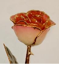 Rose - 24Kt Gold - Cream and Pink