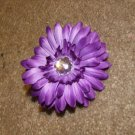 Purple Gerber Daisy
