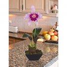 Cattleya w/Classic Black Vase