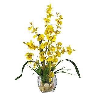Dancing Lady Orchid Liquid Illusion - Yellow