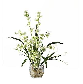 Dancing Lady Orchid Liquid Illusion - Green