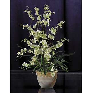 Dancing Lady Silk Orchid Arrangement - Green