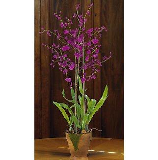 Dancing Lady w/Moss Pot - Purple