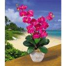Double Stem Phalaenopsis Silk Flower Arrangement - Beauty