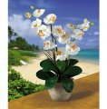 Double Stem Phalaenopsis Silk Flower Arrangement - Cream