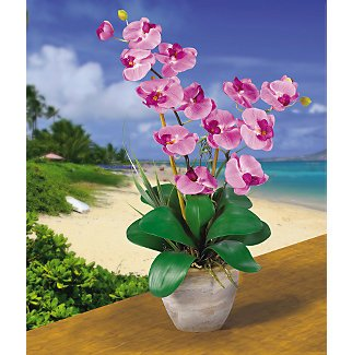 Double Stem Phalaenopsis Silk Flower Arrangement - Muave
