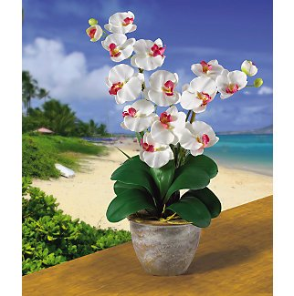 Double Stem Phalaenopsis Silk Flower Arrangement - White