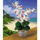 Double Stem Phalaenopsis Silk Flower Arrangement - White