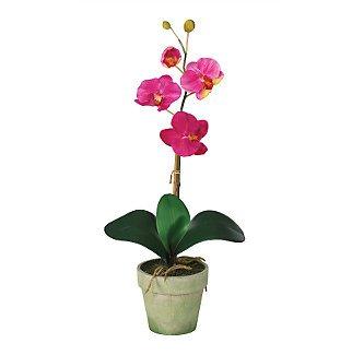 Phalaenopsis Silk Orchid Flower Arrangement - Beauty