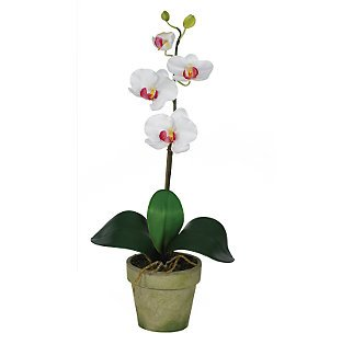 Phalaenopsis Silk Orchid Flower Arrangement - White