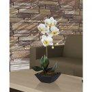 Phalaenopsis W/Classic Black Vase - White Yellow