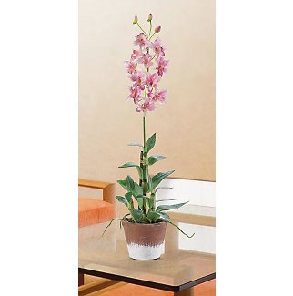 Rose Dendrobium w/White Wash Pot