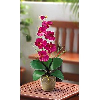 Single Stem Phalaenopsis Orchid Silk Flower Arrangement - Beauty