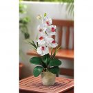 Single Stem Phalaenopsis Orchid Silk Flower Arrangement - White