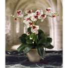 Triple Mini Phalaenopsis Silk Flower Arrangement - White Dubonet