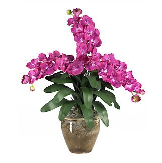 Triple Stem Vanda - Beauty