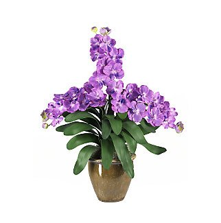 Triple Stem Vanda - Purple