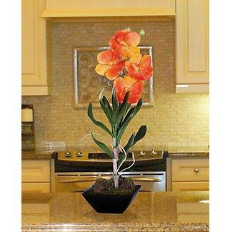 Vanda W/Classic Black Vase