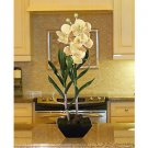 Vanda W/Classic Black Vase - Green Peach