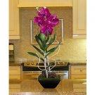 Vanda W/Classic Black Vase - Orchid