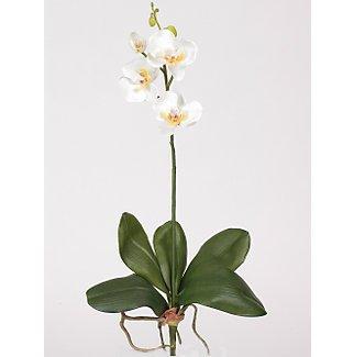 Mini Phalaenopsis Silk Orchid Flowers-White Yellow