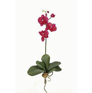 Mini Phalaenopsis Silk Orchid Flowers-Wine