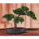 "16"" Cedar Bonsai Tree"