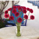 Gerber Daisy Liquid Illusion - Red
