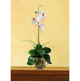 Mini Phalaenopsis L.I. Silk Orchid Flowers - Light Pink
