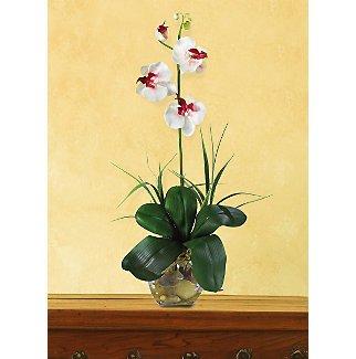 Mini Phalaenopsis L.I. Silk Orchid Flowers - White Dubonet