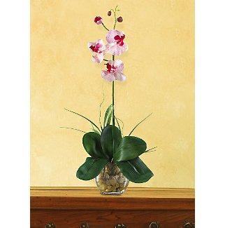 Mini Phalaenopsis L.I. Silk Orchid Flowers - White Pink