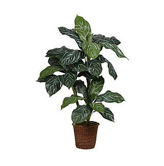 3.5 Ft Varigated Green Levin Silk Plant