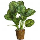 "31"" Calathea Silk Plant(Real Touch)"
