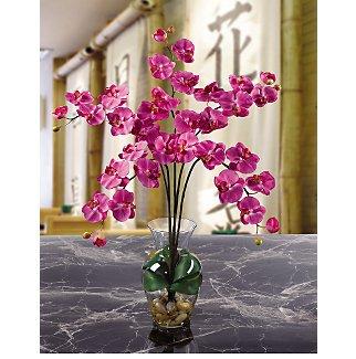 Phalaenopsis Liquid Illusion - Dark Pink