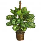"43"" Calathea Silk Plant(Real Touch)"