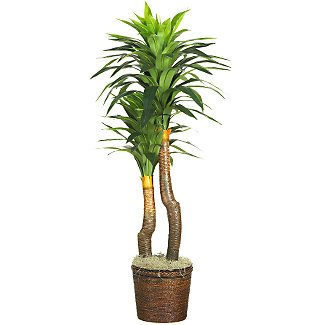 """62"""" Yucca Silk Plant(Real Touch)"""