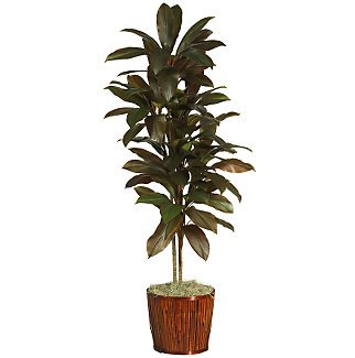 "64"" Cordyline Silk Plant(Real Touch)"
