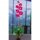 Single Phalaenopsis Liquid Illusion Silk Flower - Beauty