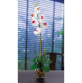 Single Phalaenopsis Liquid Illusion Silk Flower - White
