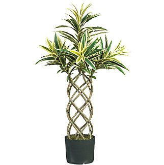 Braided Dracaena Silk Plant Green & Yellow