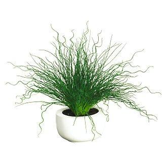 Curly Pencil Grass w/White Vase Silk Plant