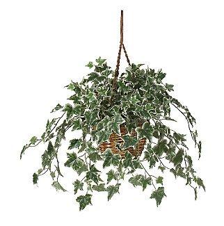 Holland Ivy Hanging Basket Silk Plant