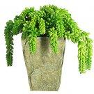 Sedum w/Vase Silk Plant