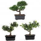 "Set of 3 8.5"" Bonsai Silk Plant Collection"