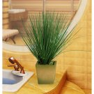 Silk Bear Grass