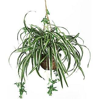 Spider Silk Hanging Basket