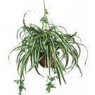 Spider Silk Hanging Basket
